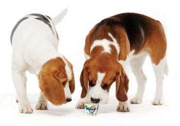 Benefits of Yogurt to Dogs
