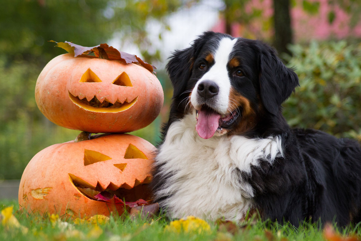 Top Tips To Keep Your Dog Safe Over Halloween!