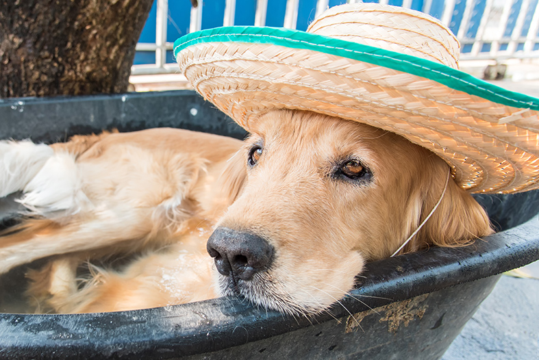 How to Keep Your Dog Cool in Hot Weather?